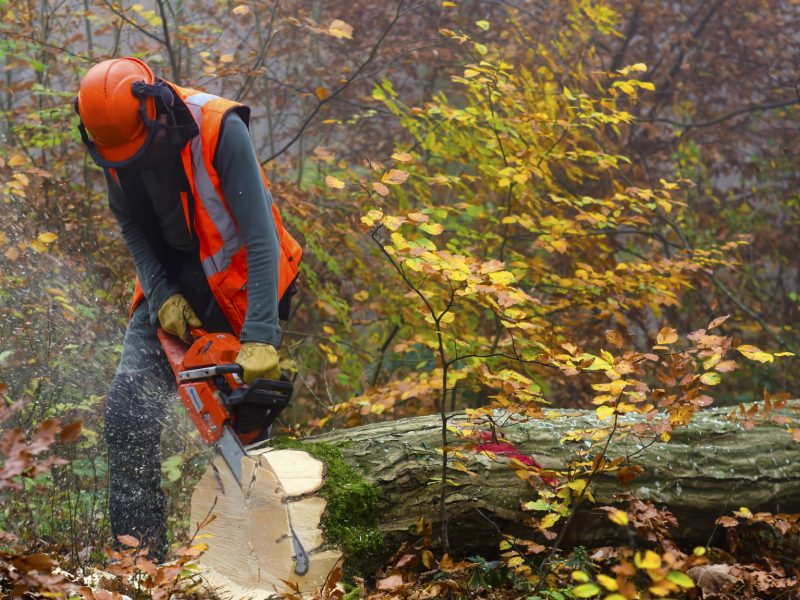 a lumberjack at work
